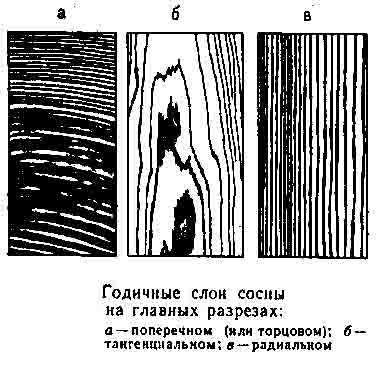 Годичные слои сосны на главных разрезах